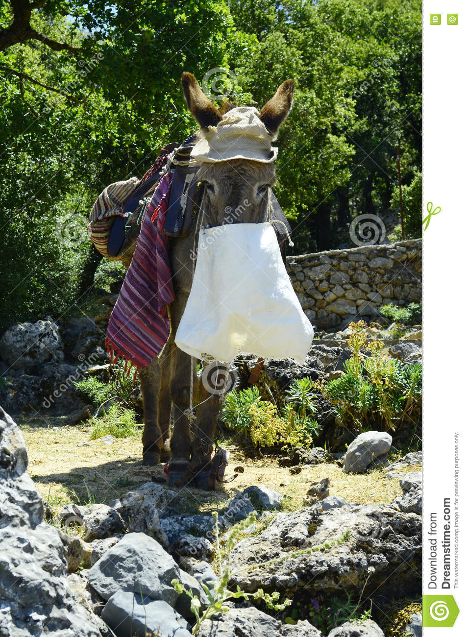 Greece, Crete, donkey