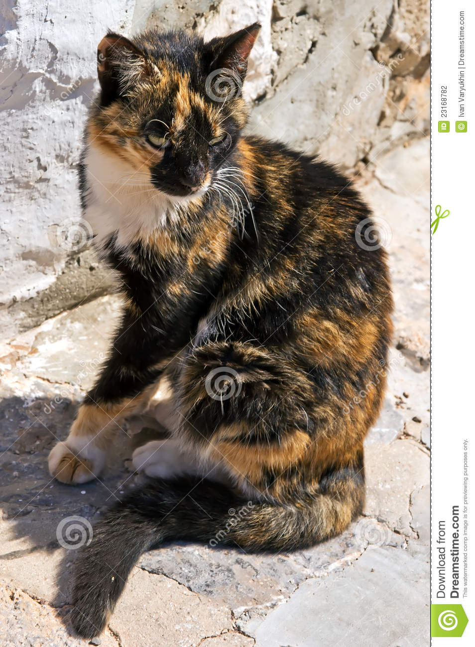 greek calico cat stock photography image 23168782