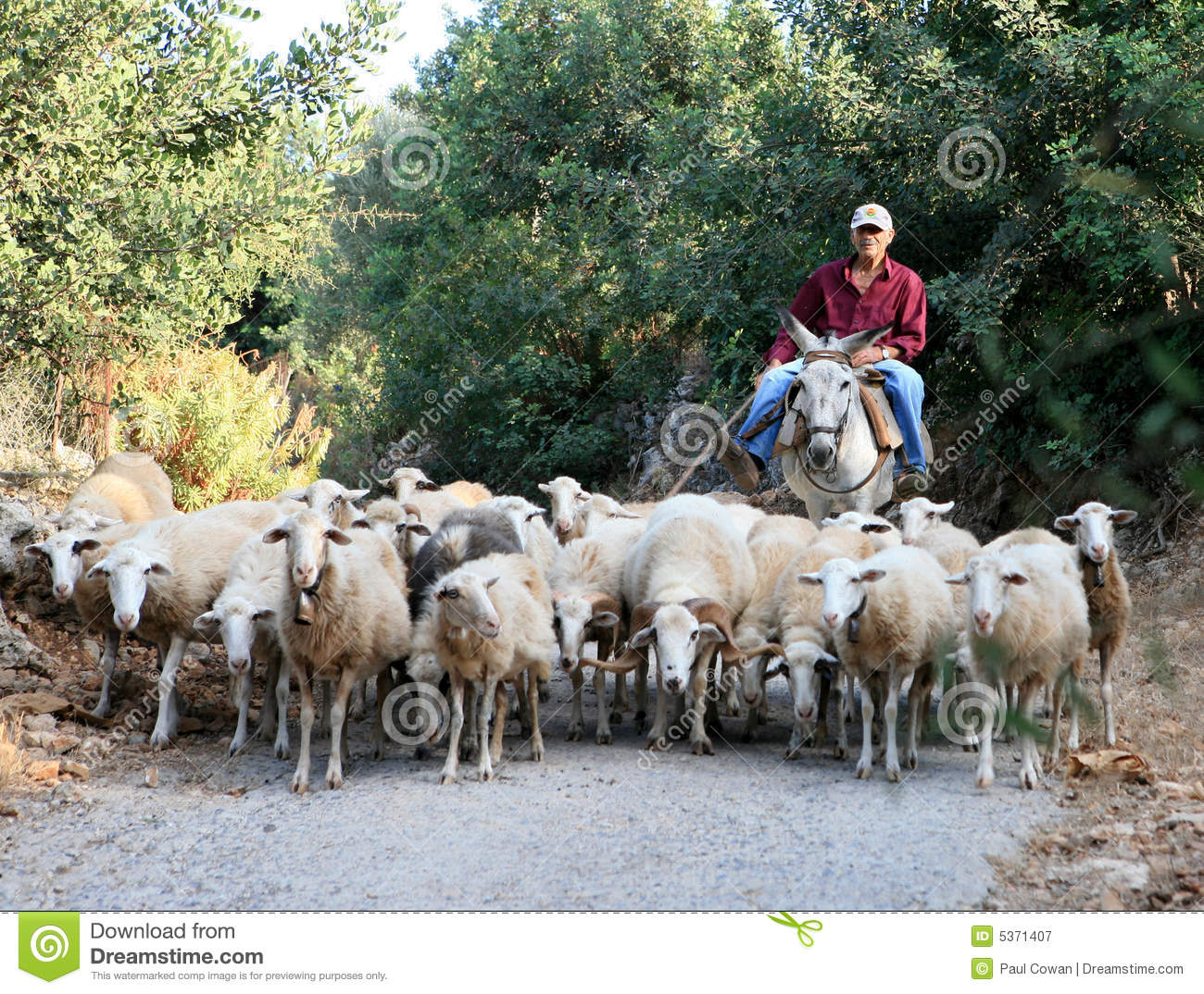 Greek shepherd with flock and donkey