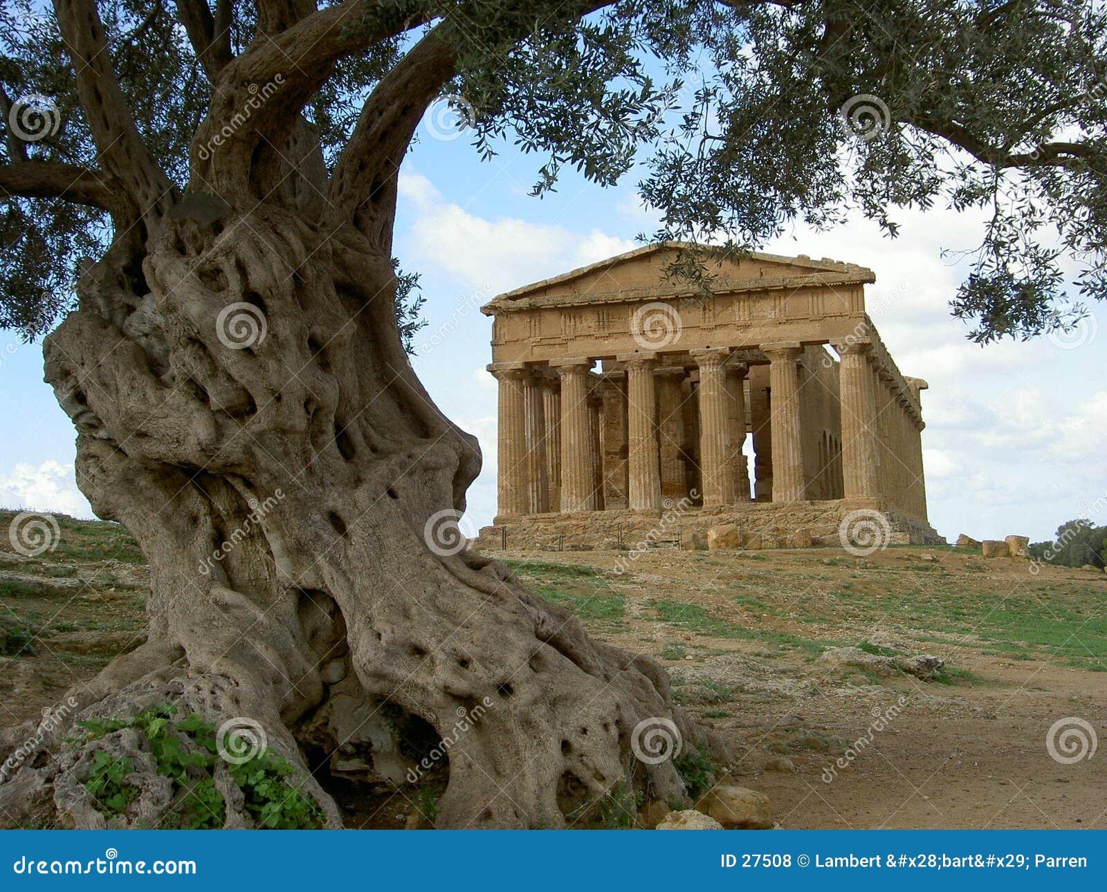 Greek temple & olive tree