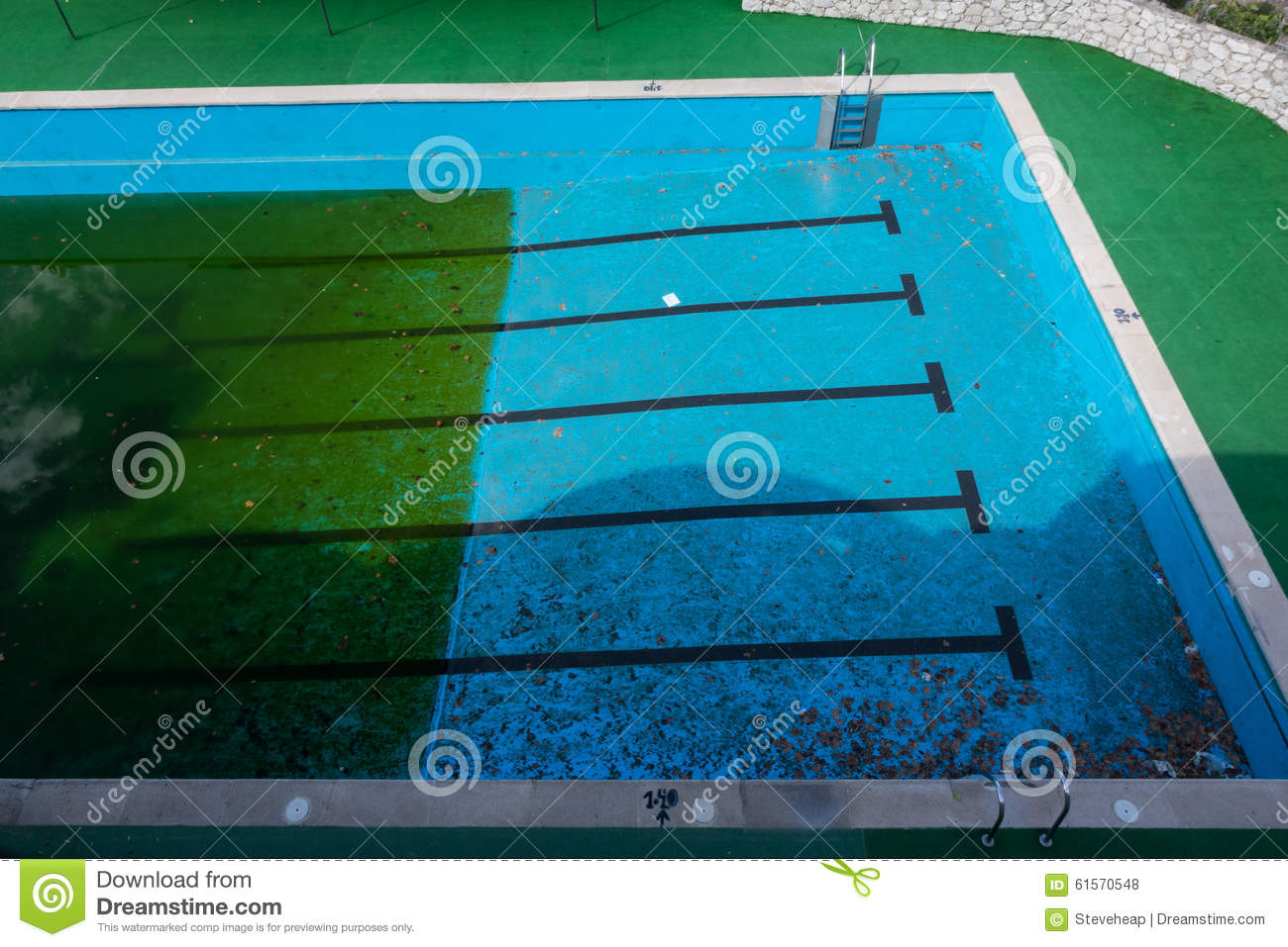 Green Algae Swimming Pools : Green algae growing in neglected swimming pool stock photo