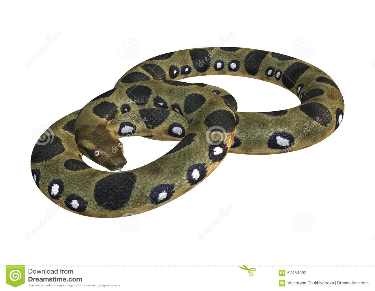 green anaconda on white stock photo image 67464392 free wildlife clip art letters free wildlife clipart