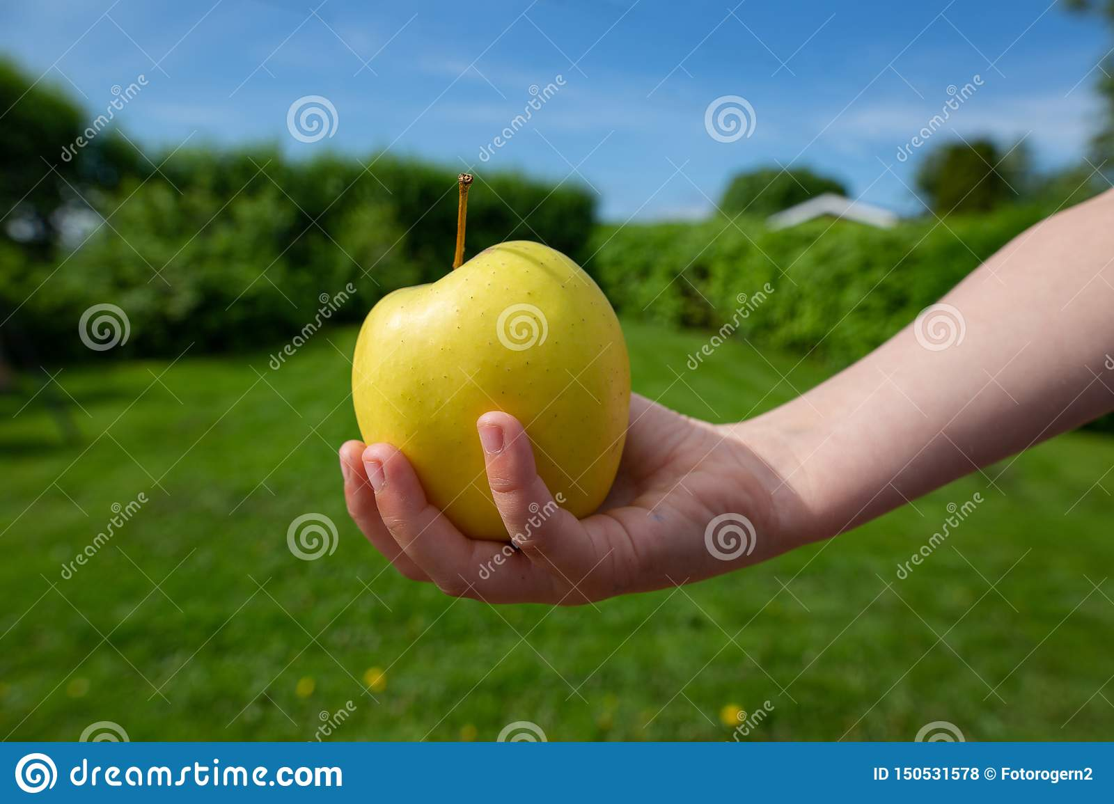 A green apple in a hand reaching out