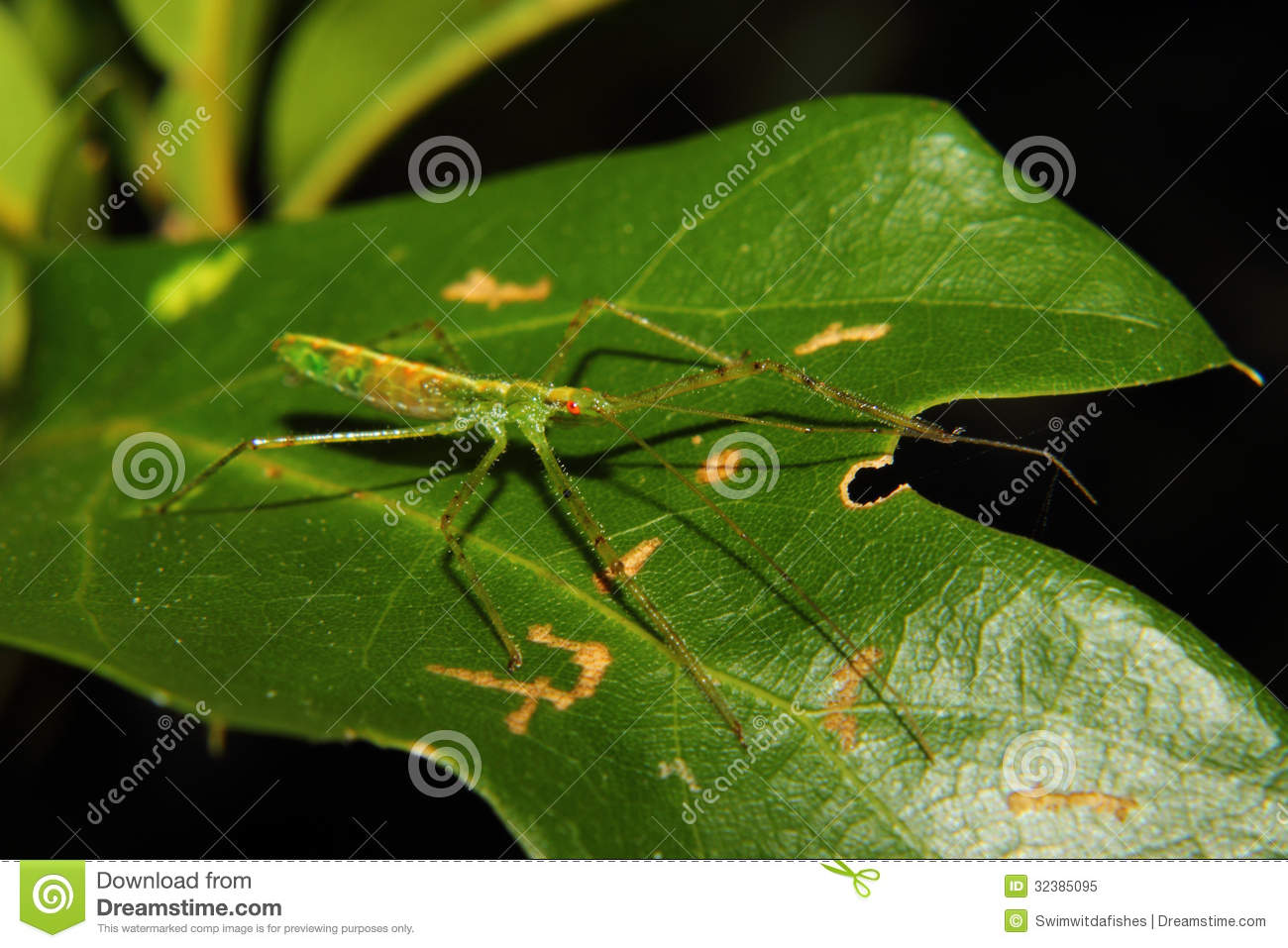 green assassin bug nymph royalty free stock photo image 32385095. Black Bedroom Furniture Sets. Home Design Ideas
