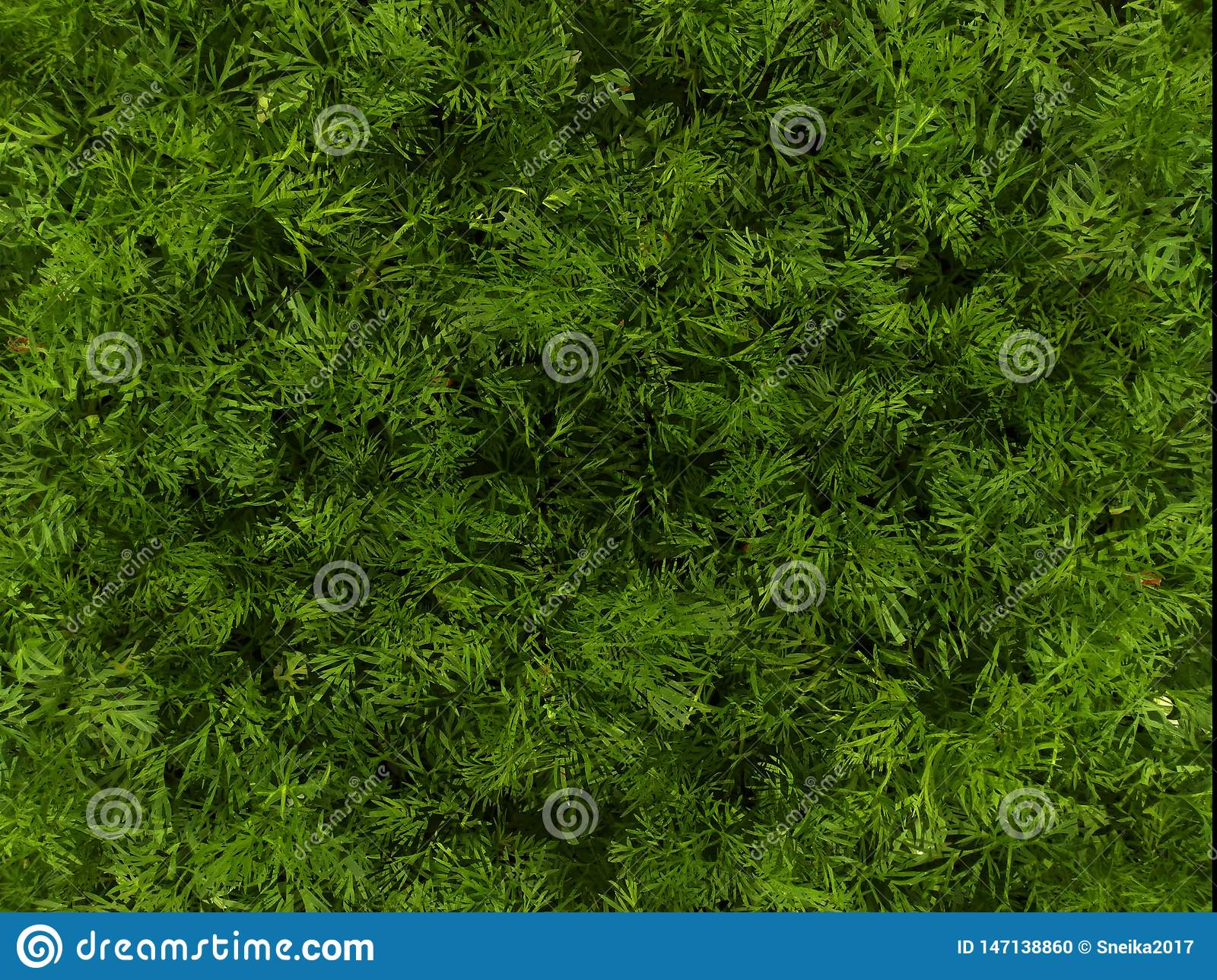 Green background based on photos of spring grass.