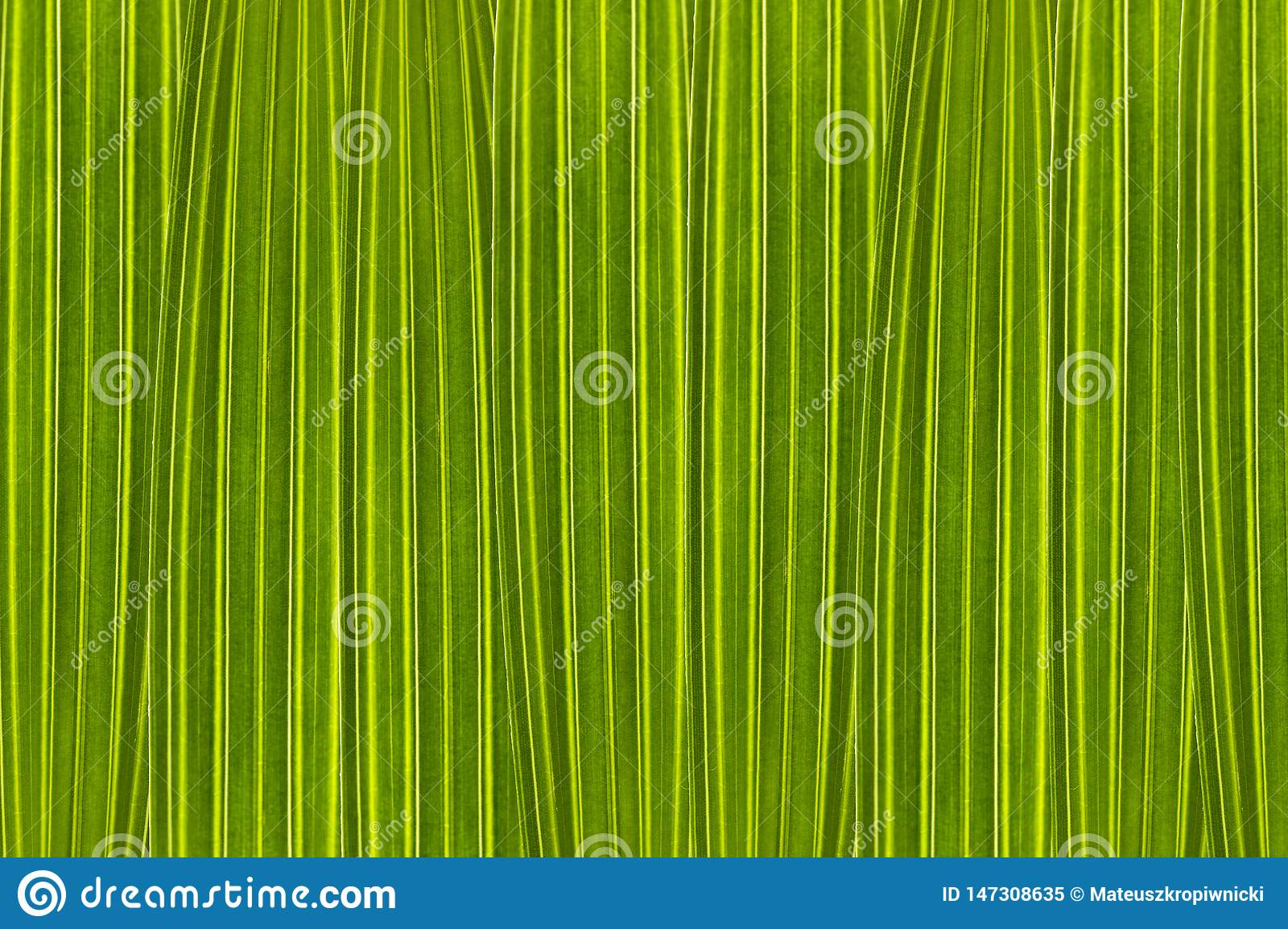 Green background composed of palm tree leaves in high magnification