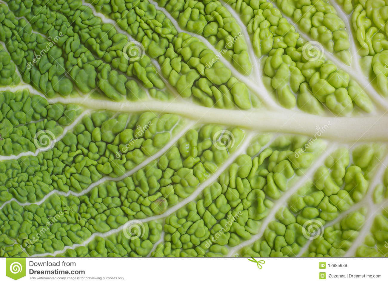 Green Background - Detail Of A Cabbage Leaf Stock Image ...