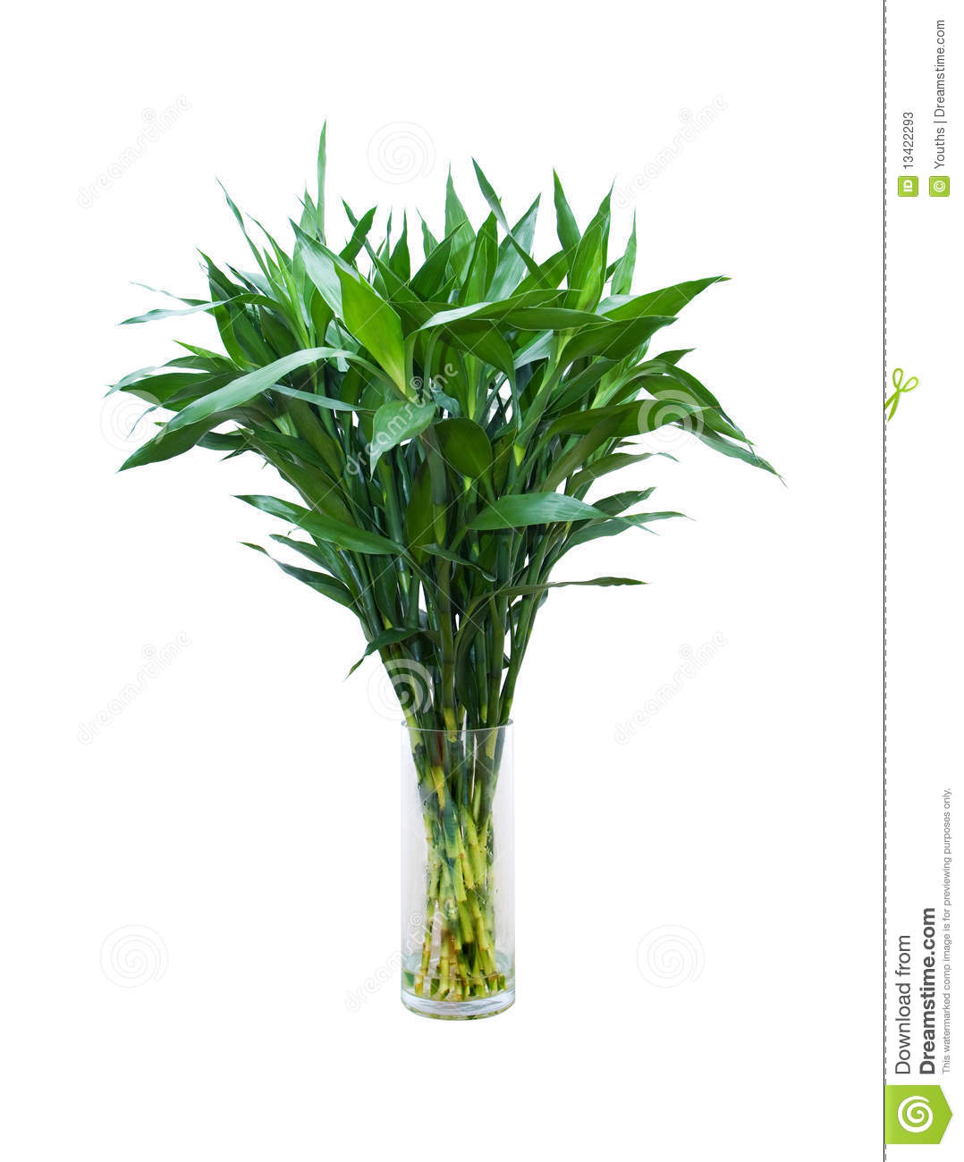 Green Bamboo In A Glass Vase Isolated On White Background Stock Image Image 13422293
