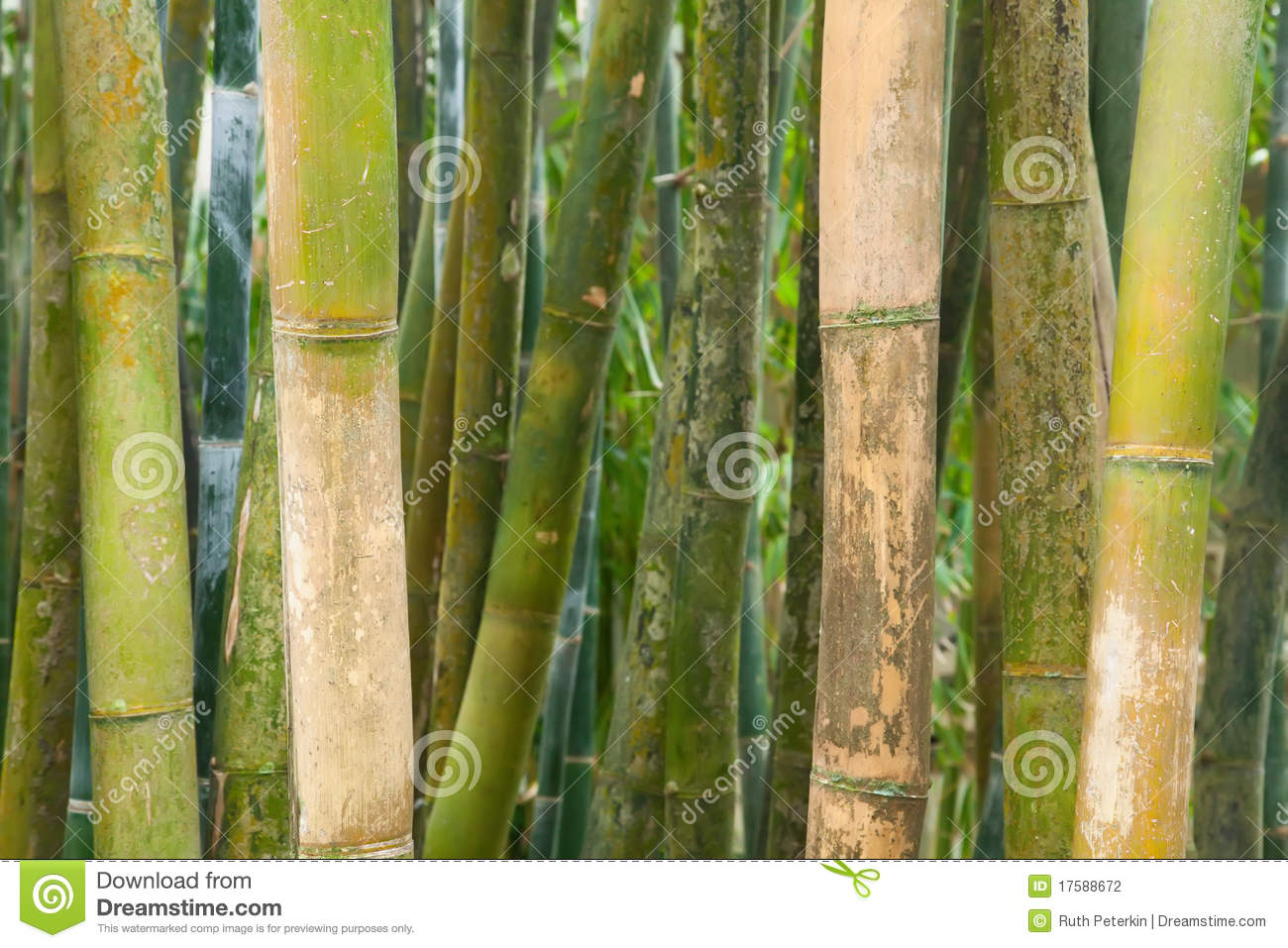 Green bamboo poles stock photography image