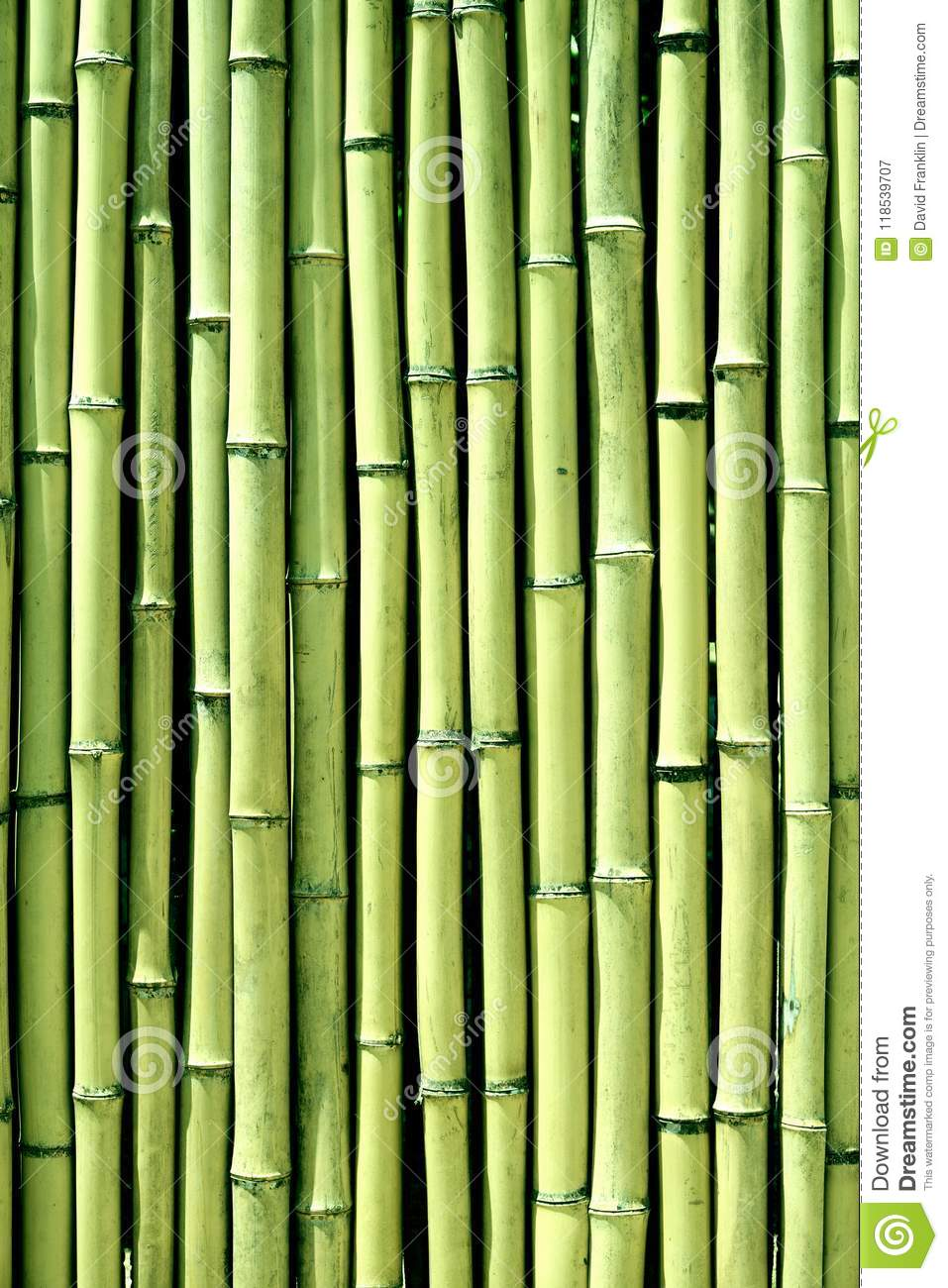 Green Bamboo Wood Wall Background Texture Vertical Stock Image