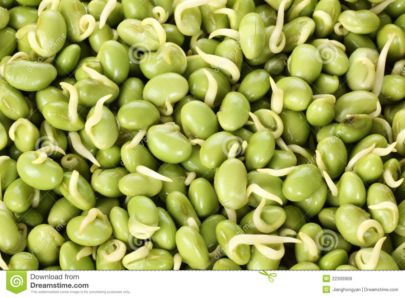 how to make sprouts at home using sprout maker