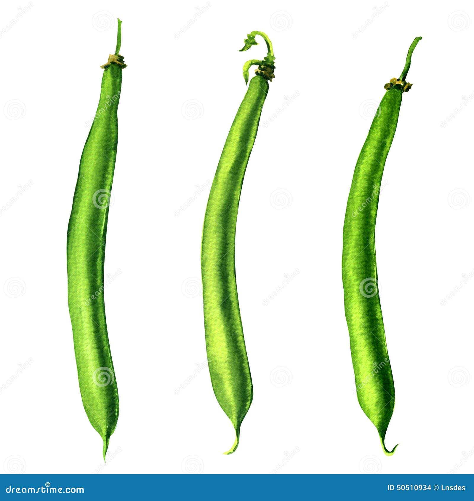 Green Beans On White Background Stock Illustration - Image: 50510934