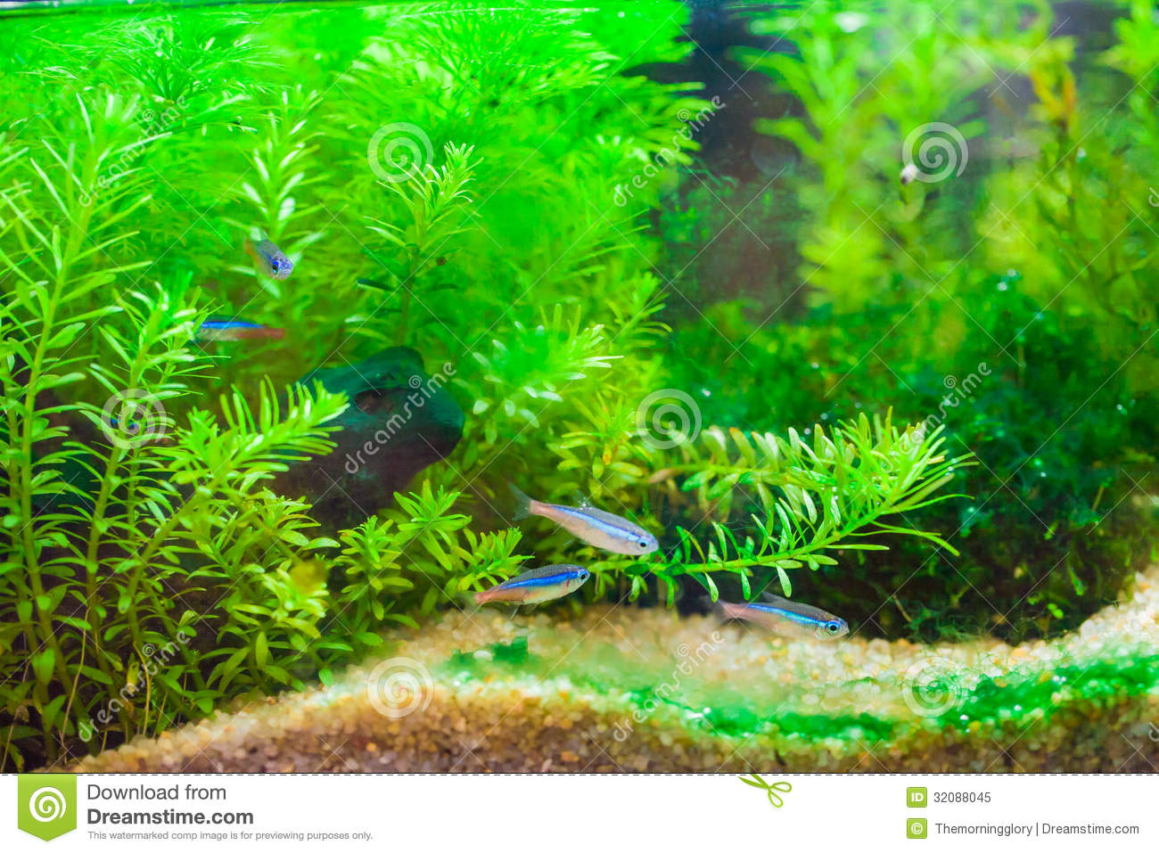 ... : Green beautiful planted tropical freshwater aquarium with fishes
