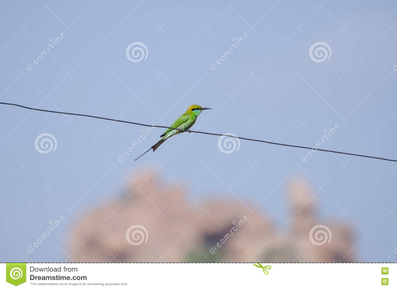 Green Bird Sitting On The Wire, India Stock Image - Image of waiting ...