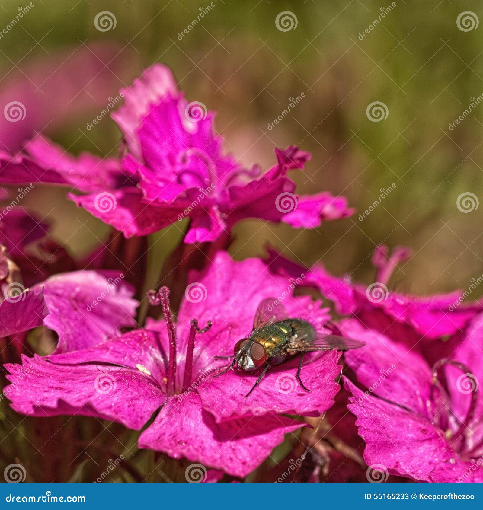 Green Bottle on Pink Flowers