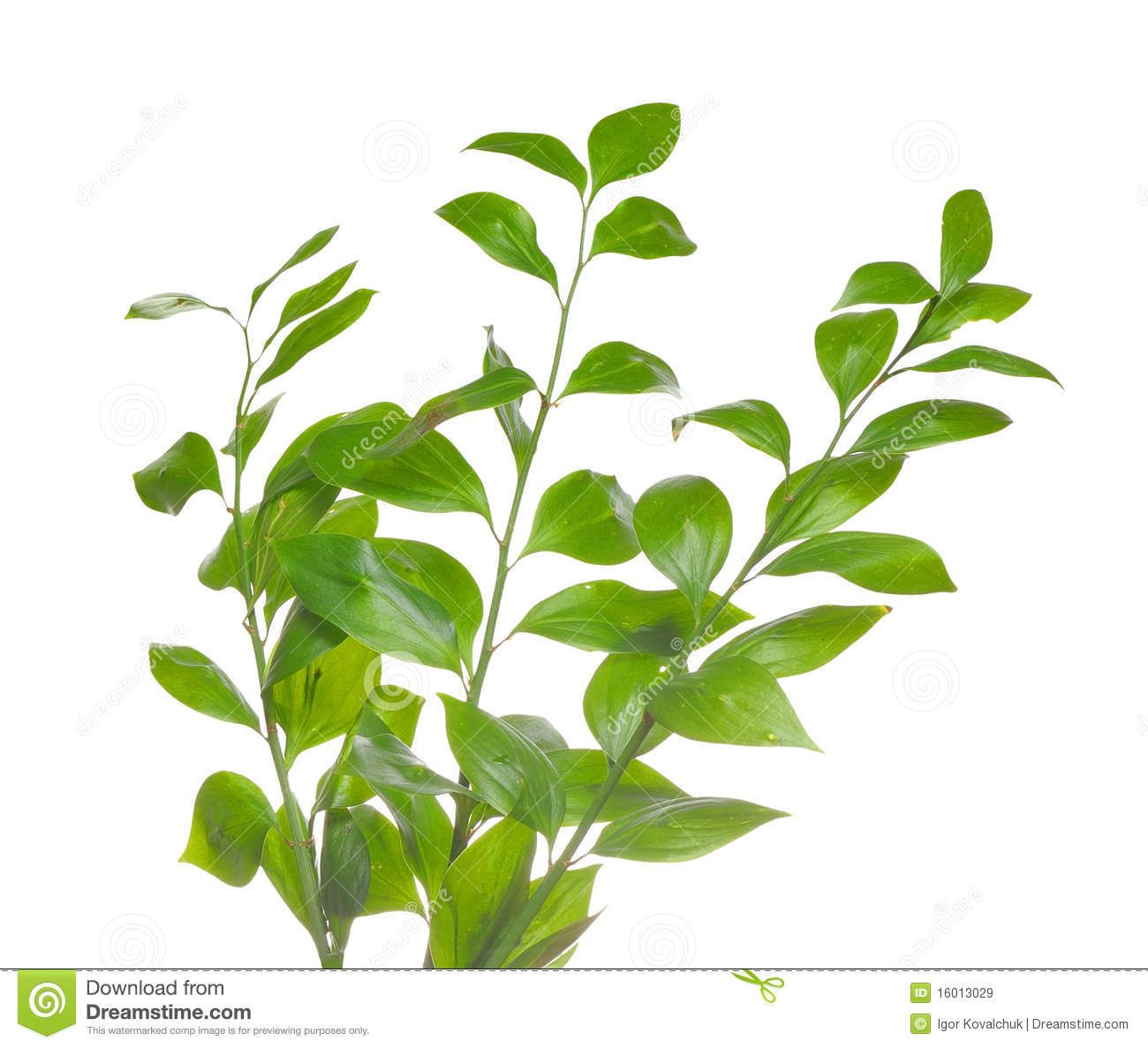 Green branch isolated royalty free stock images image for Green pflanzen