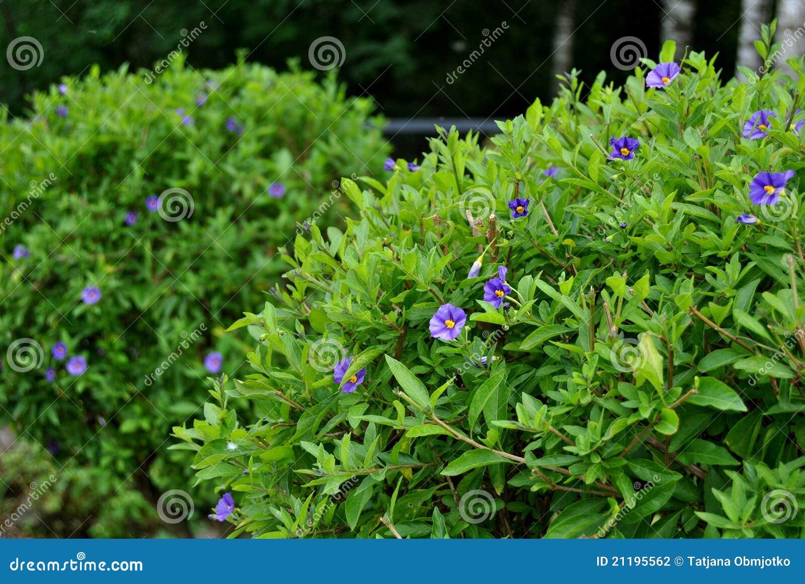 Green Bush Stock Photo Image Of City Tree Leaf Flower