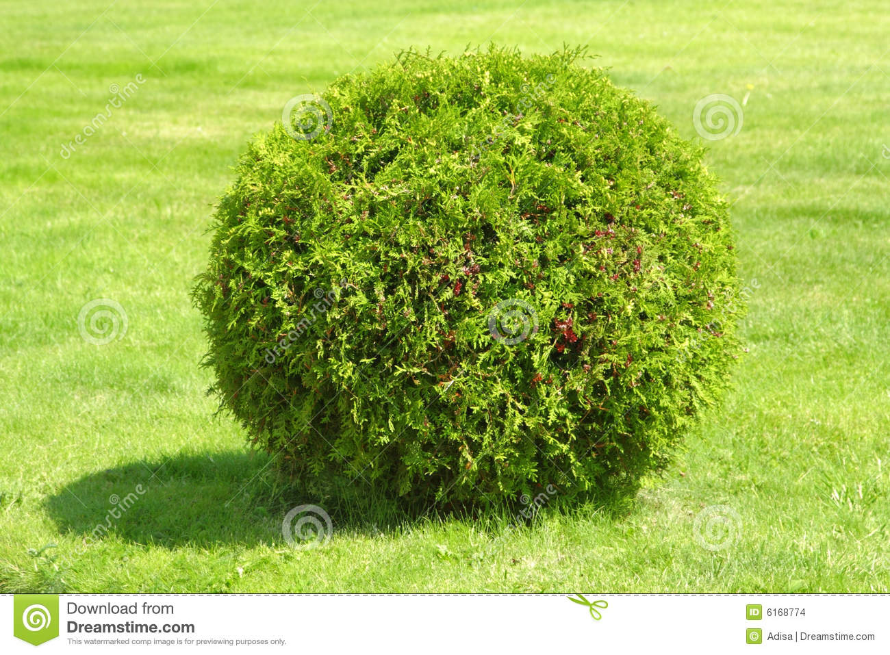 Green Bush Stock Images - Image: 6168774