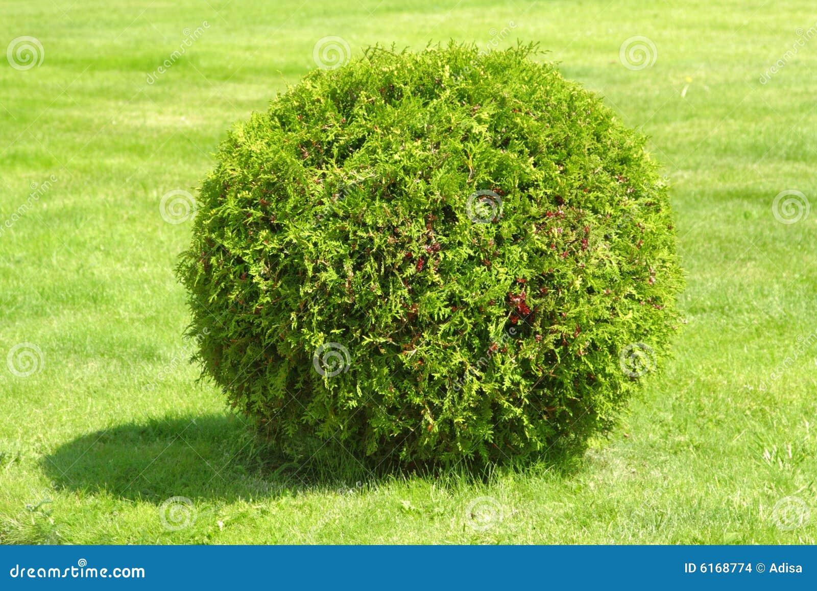 Green bush stock photo. Image of decor, grass, handmade ...