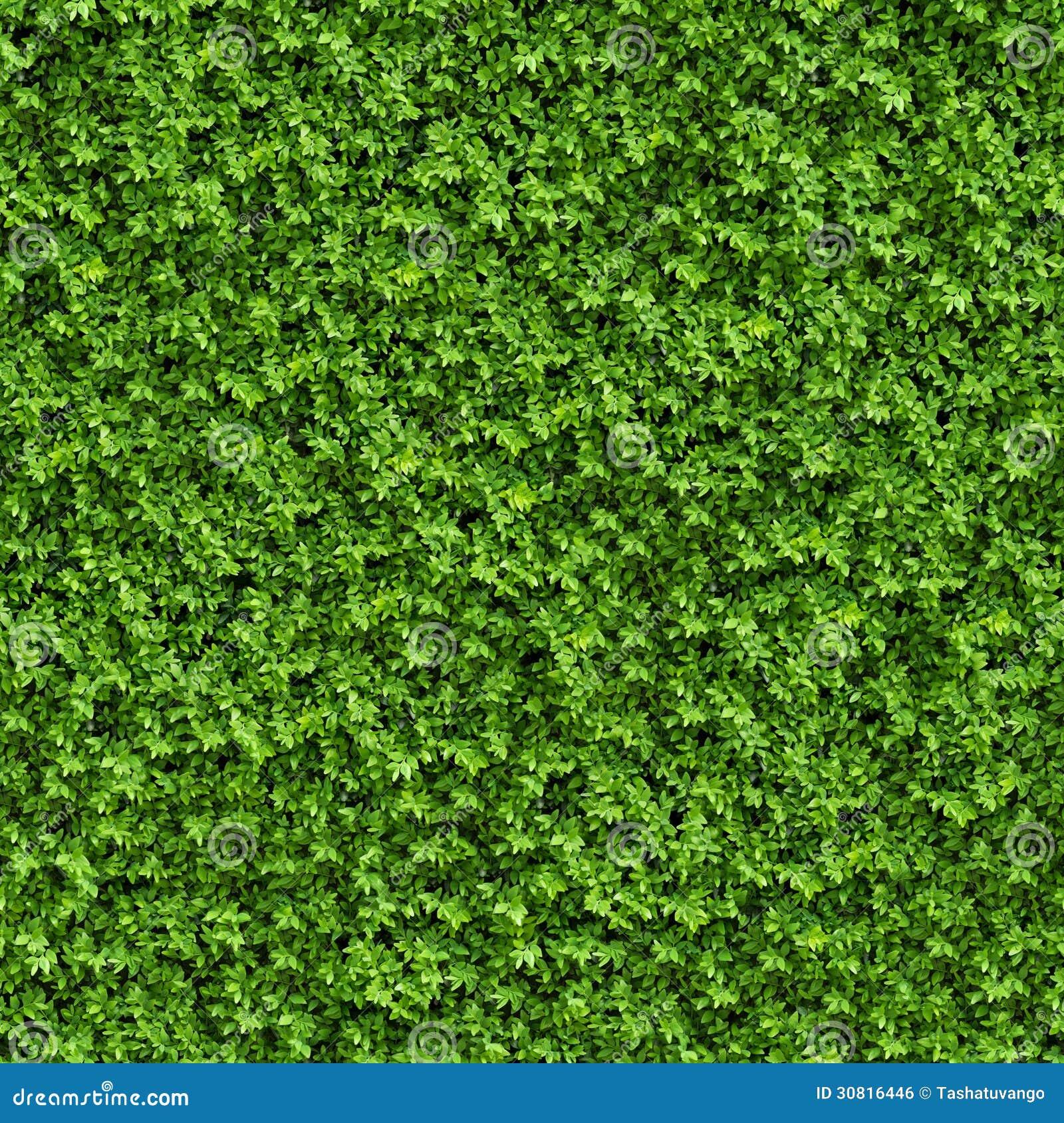 Green Bush Seamless Texture Stock Illustration