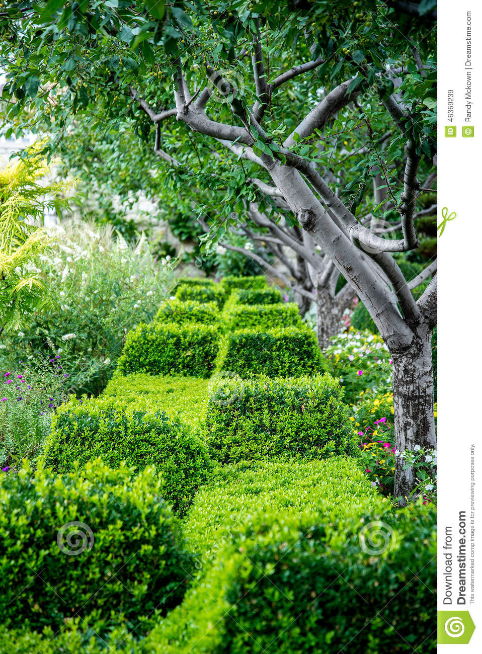 Residential Landscaping Plants : Green bushes shrubs in garden stock photo image