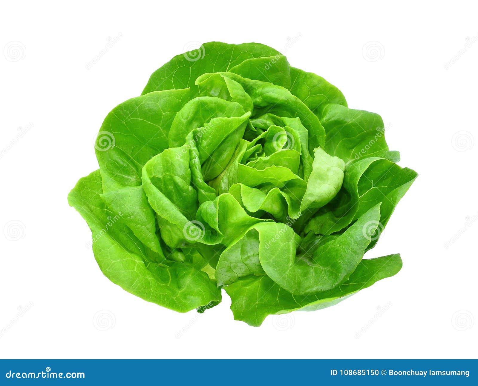 Green butter lettuce vegetable or salad isolated on white