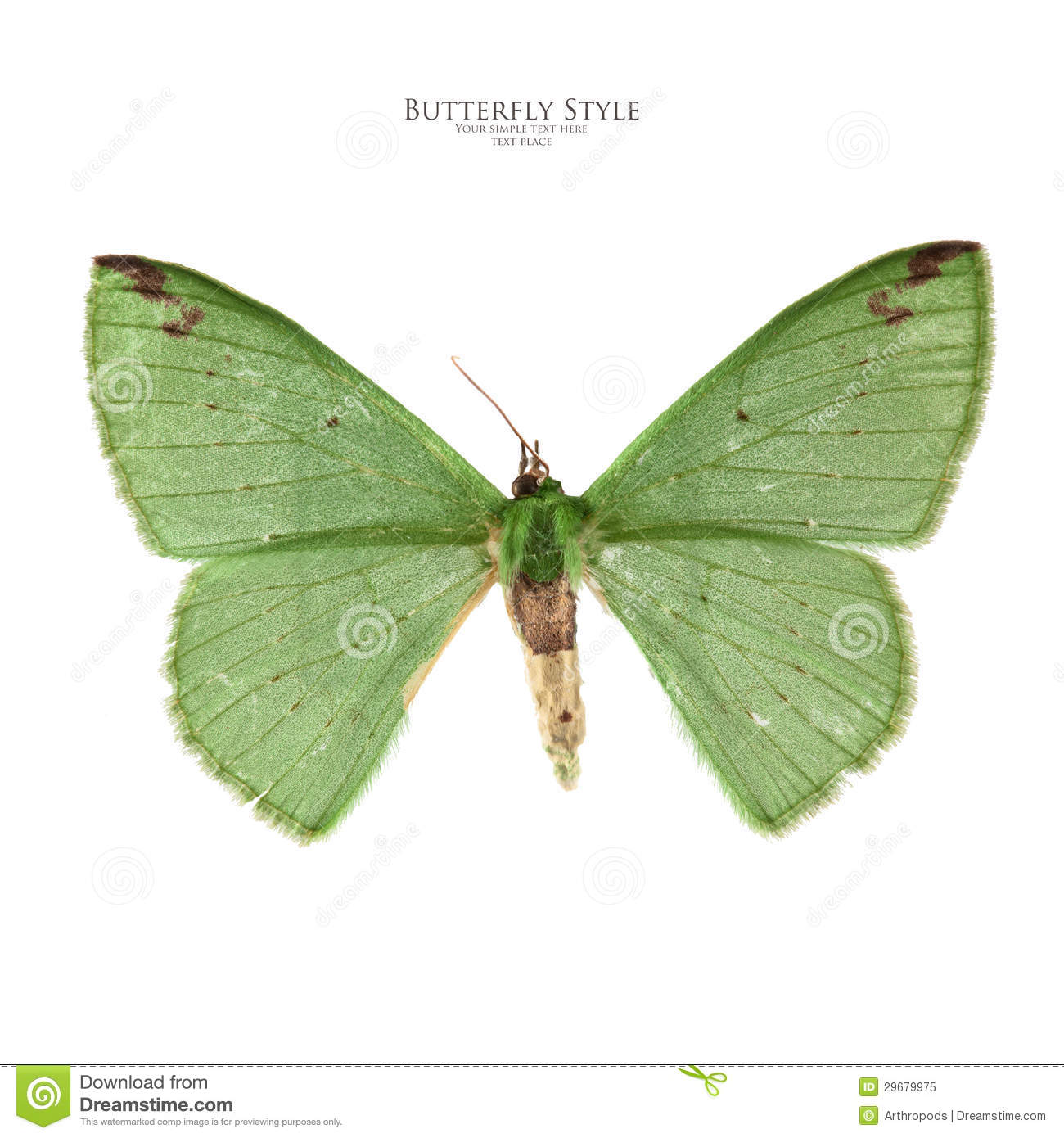Green Butterfly Royalty Free Stock Photo - Image: 29679975