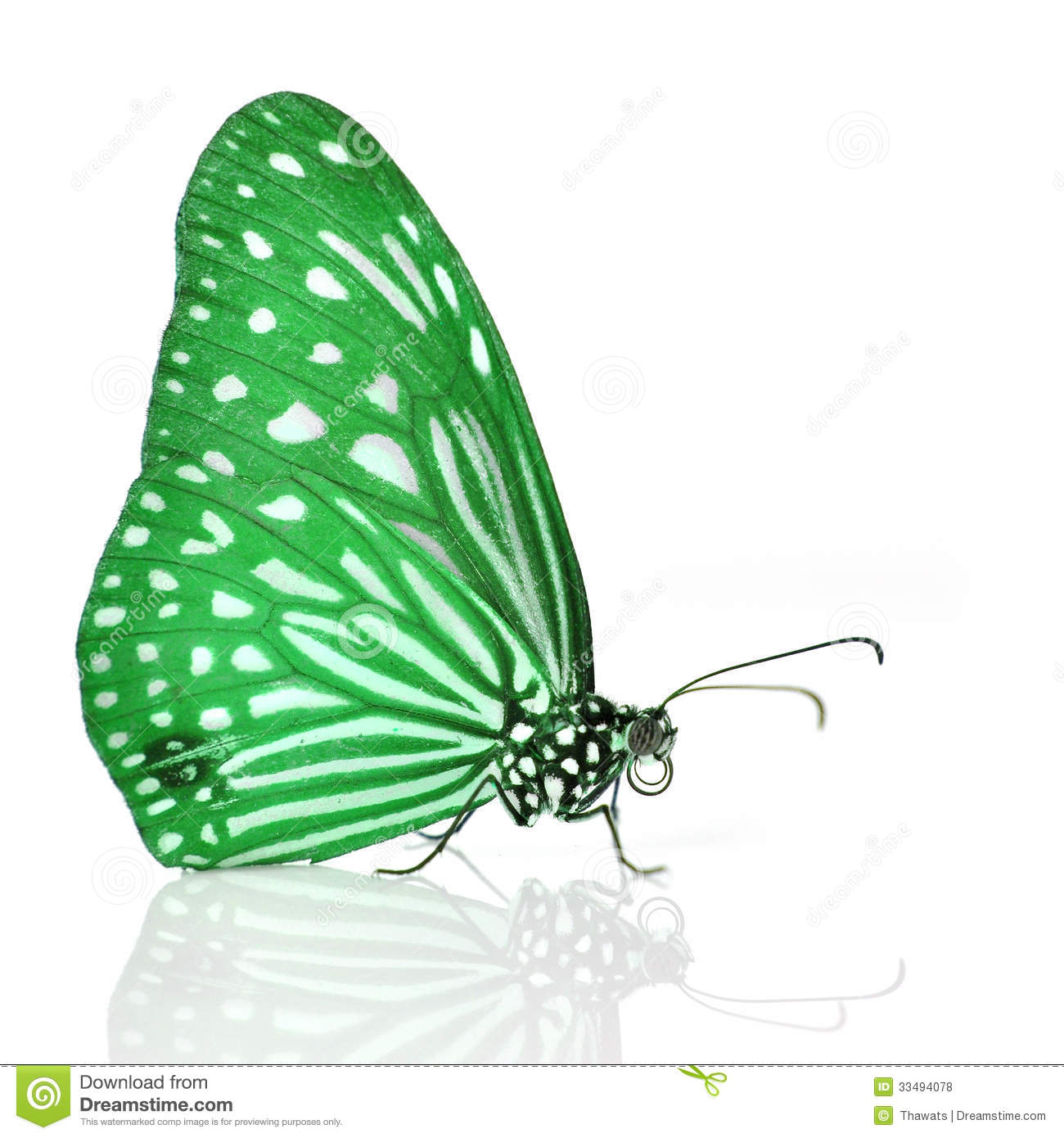 Green Butterfly Royalty Free Stock Photos - Image: 33494078