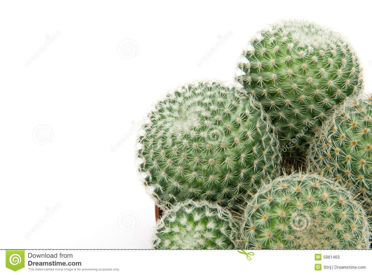 Download Green cactus stock image. Image of thorn, herb, macro - 5961463