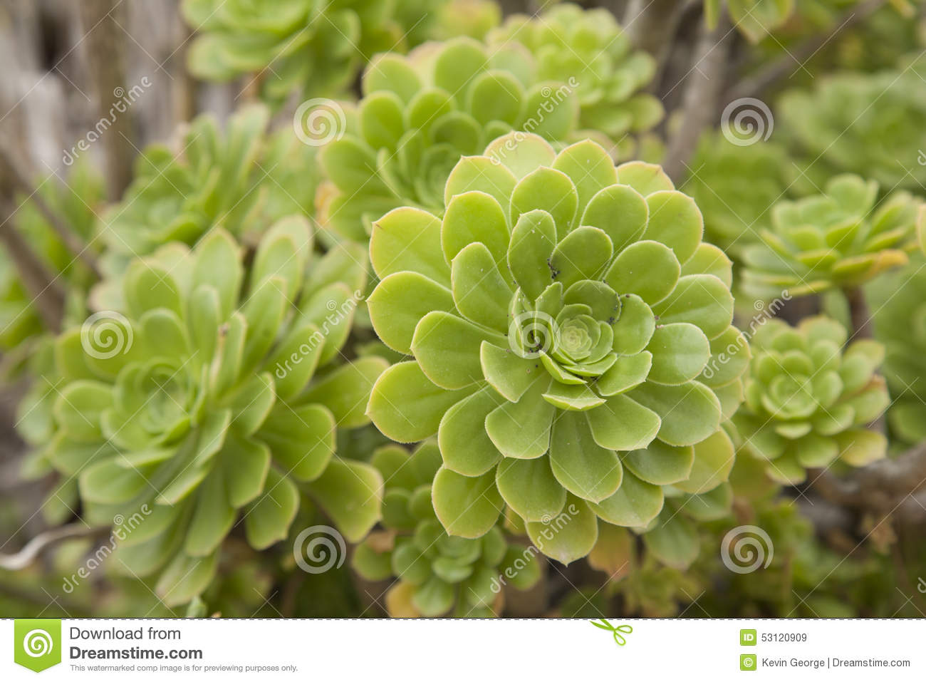 Download Green Cactus Flower stock image. Image of nature, plant - 53120909