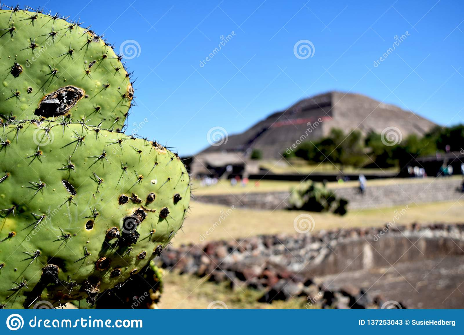 Green cactus in front of pyramid