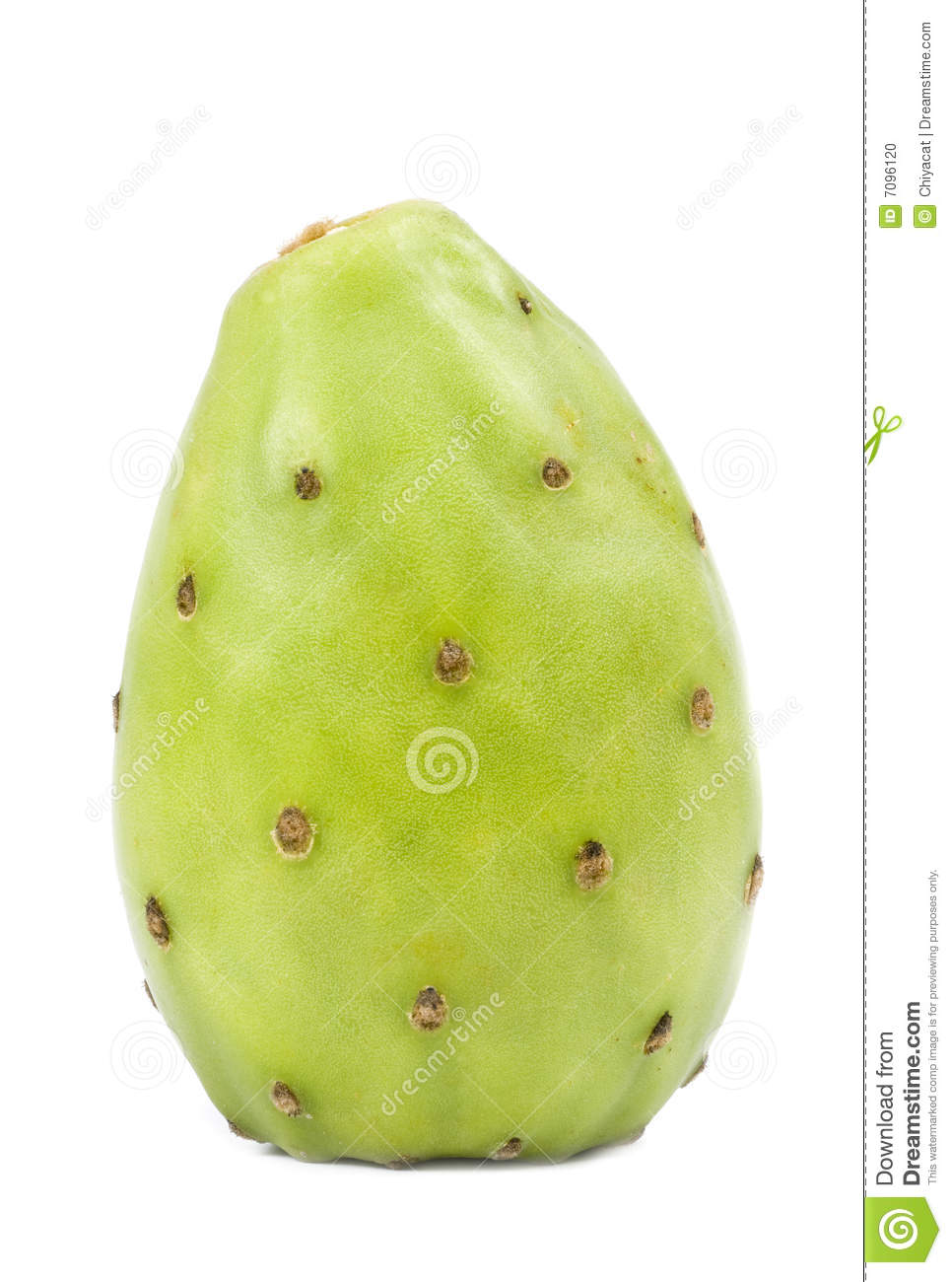 Green Cactus Pear Stock Photo - Image: 7096120