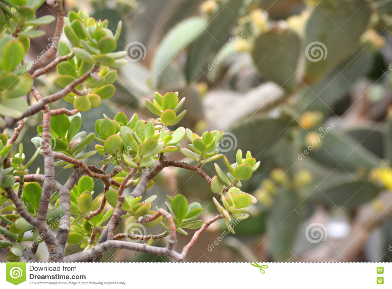 Download Green Cactus plant closeup stock photo. Image of bright - 77163182
