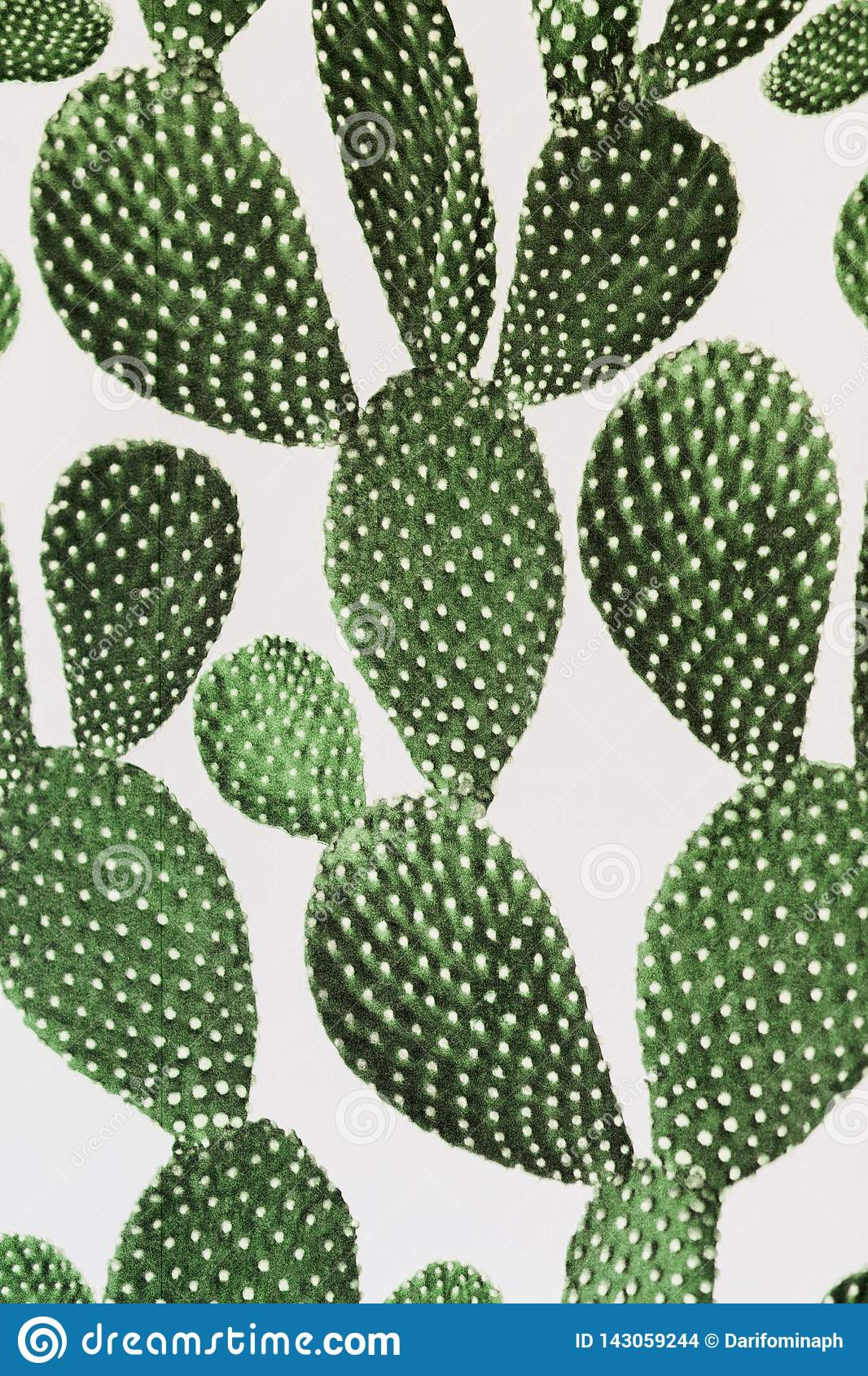 Green cactus surface. Use for texture or background