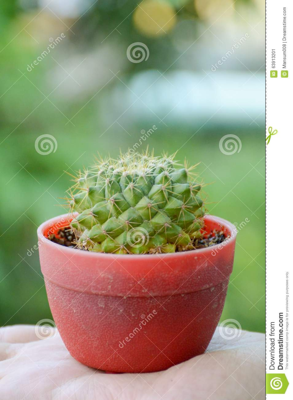 Download Green cactus tree stock image. Image of succulent, plants - 63913201