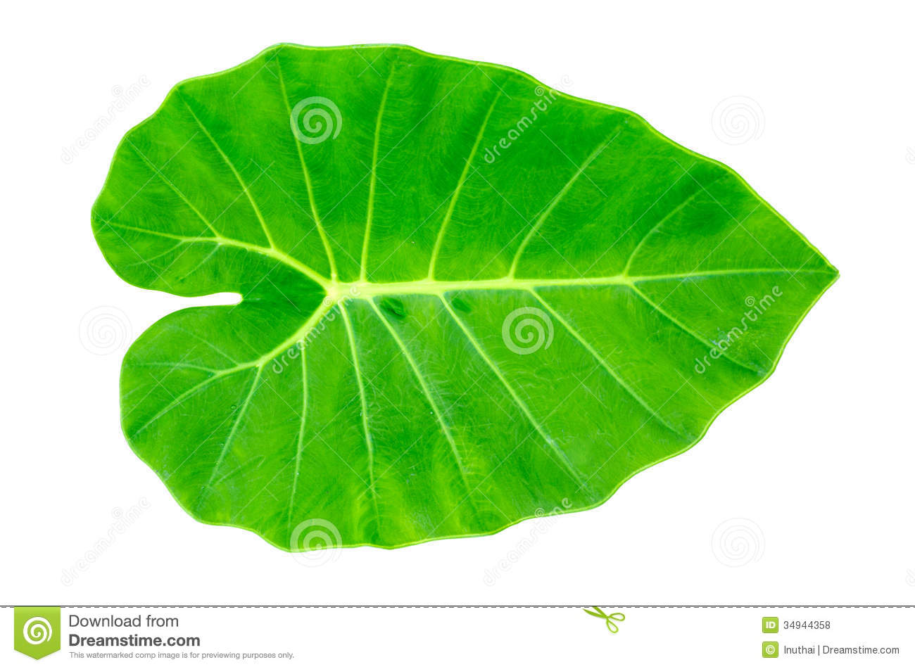 how to draw a green leaf