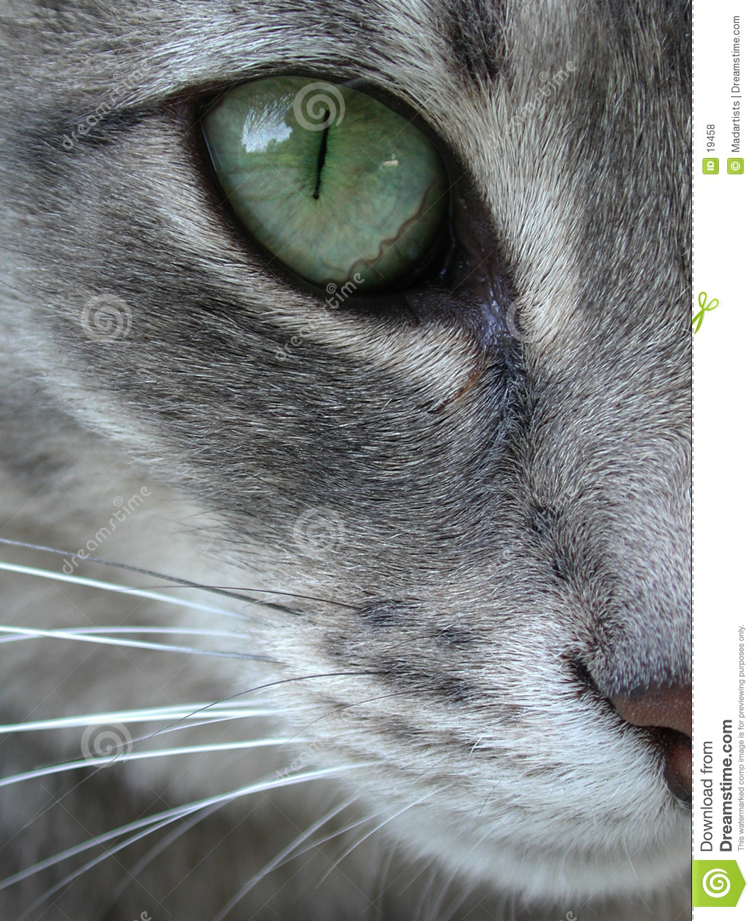 Green Cat Eye Macro Close Up