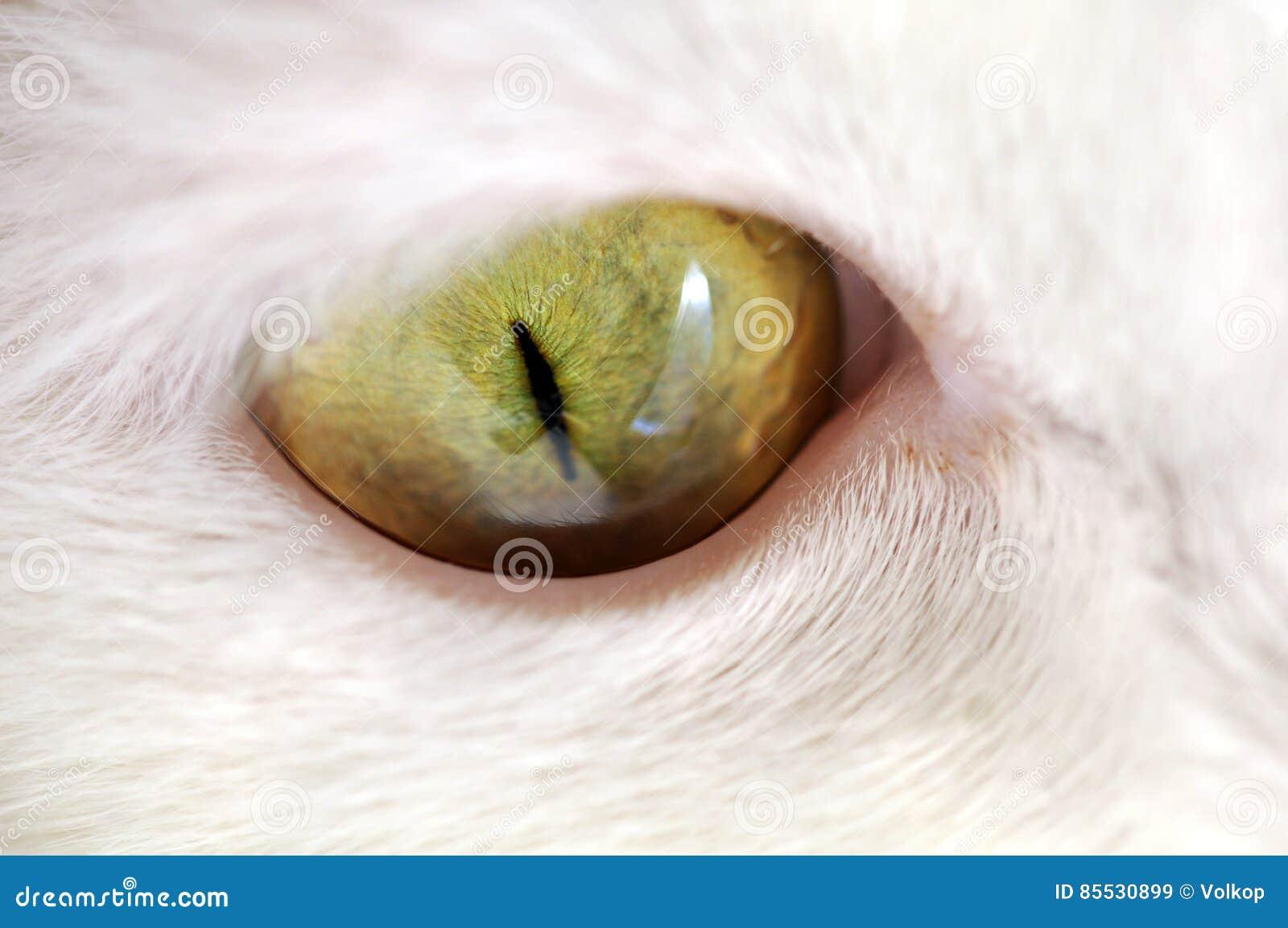 Green Cat Eye Macro