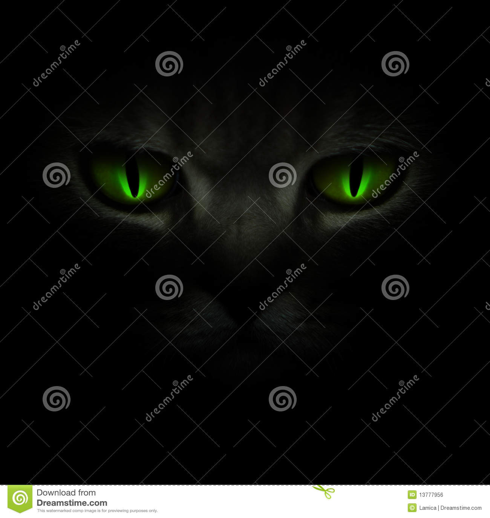 Green cat s eyes glowing in the dark