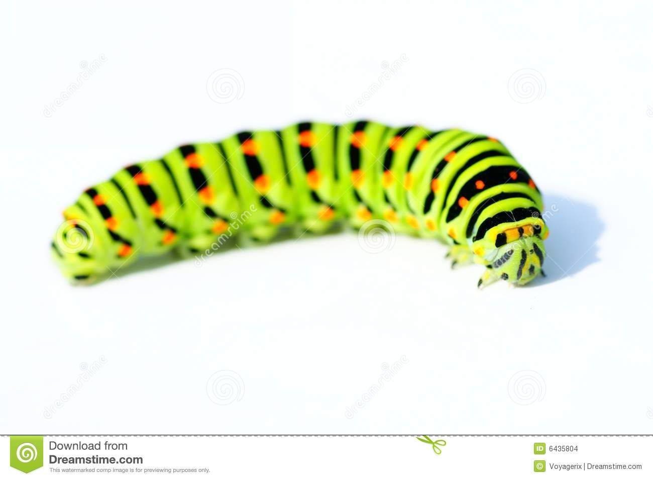 green caterpillar stock photo image of plant  close clip art caterpillar eggs clip art caterpillar butterfly