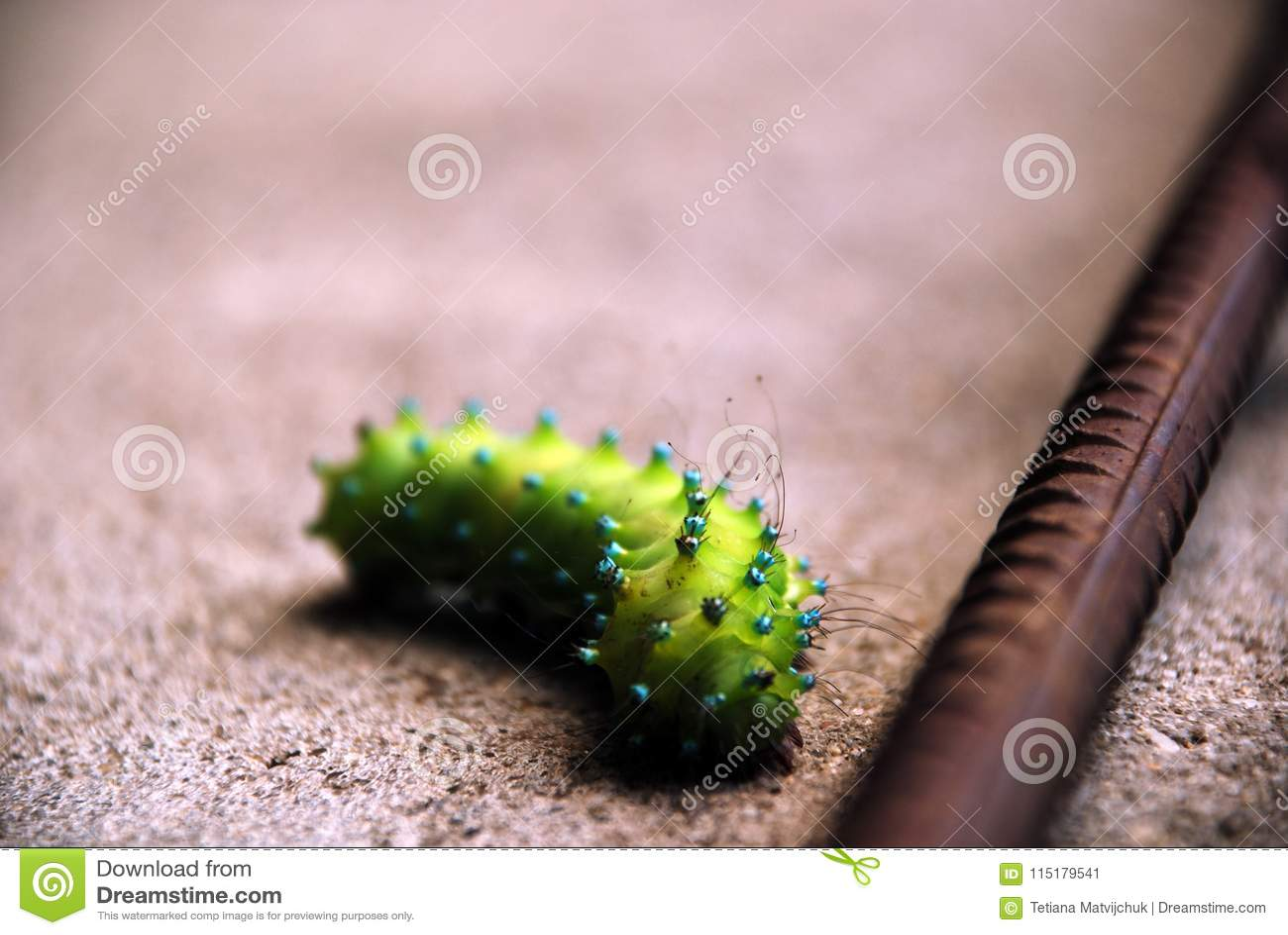 Green caterpillar crawling through sand along the rebar