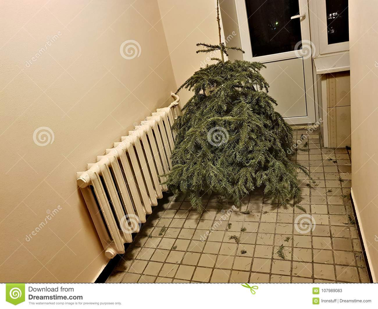 Discarded Christmas Tree After The Holiday Stock Image Image Of