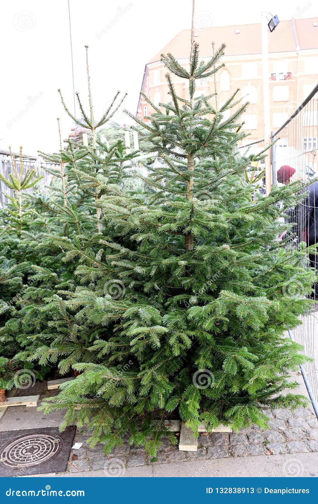 Christmas Trees For Sale.Green Christmas Trees For Sale In Copenhgen Denmark