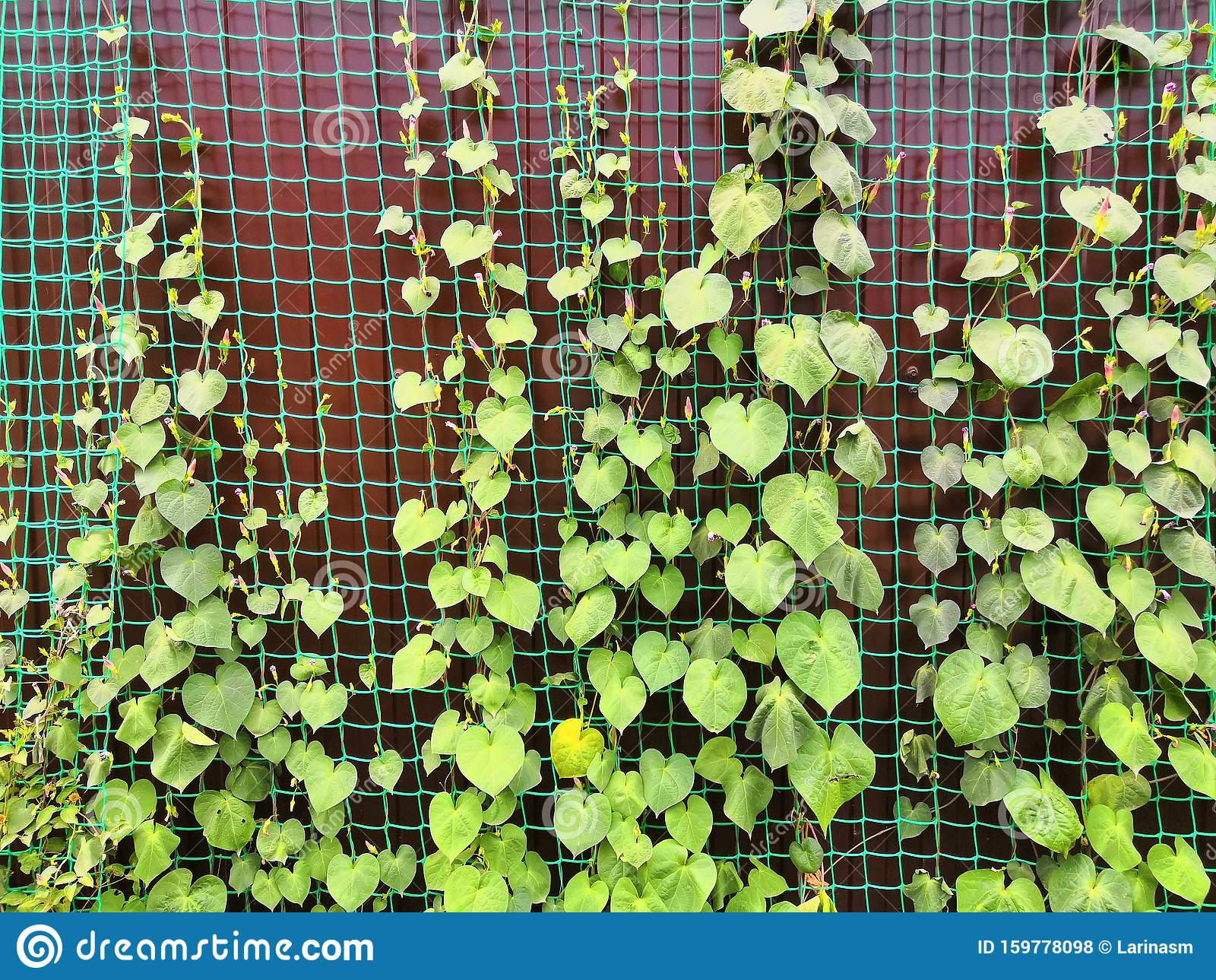 Green Climbing Plants With Leaves On Grid And Fence Background
