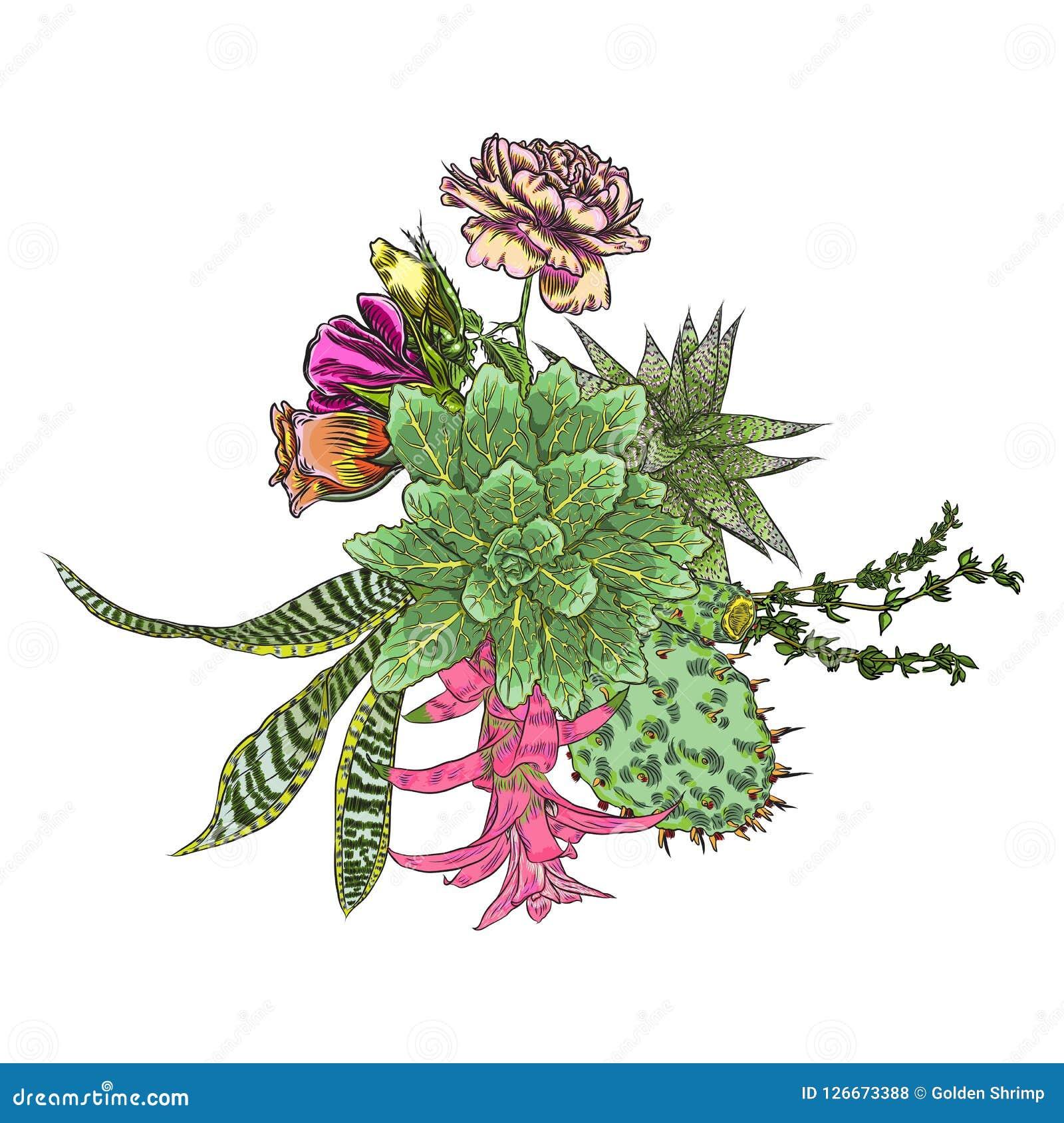 Green Colorful Succulent Bouquet Ikebana Tattoo Concept Selecti Stock Vector Illustration Of Fresh Ikebana 126673388