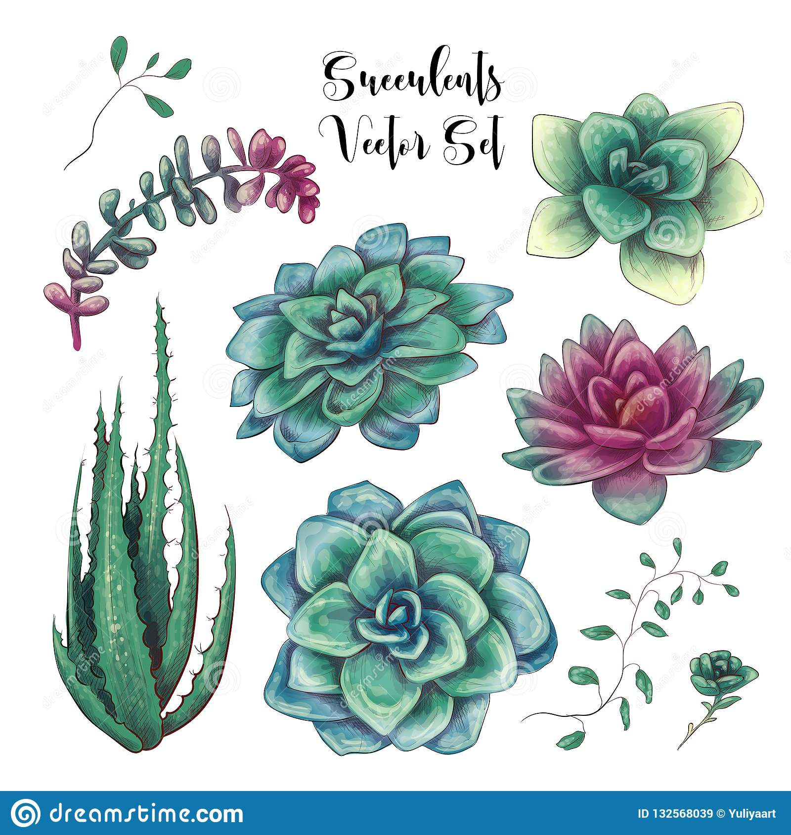 Green Colorful Succulent Bouquets Vector Design Objects Stock Illustration Illustration Of Invitation Assortment 132568039