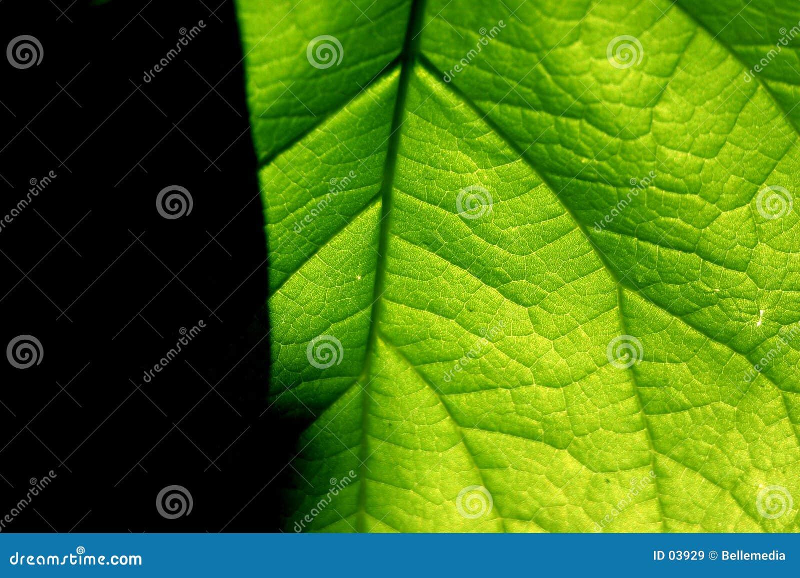 Green contrast