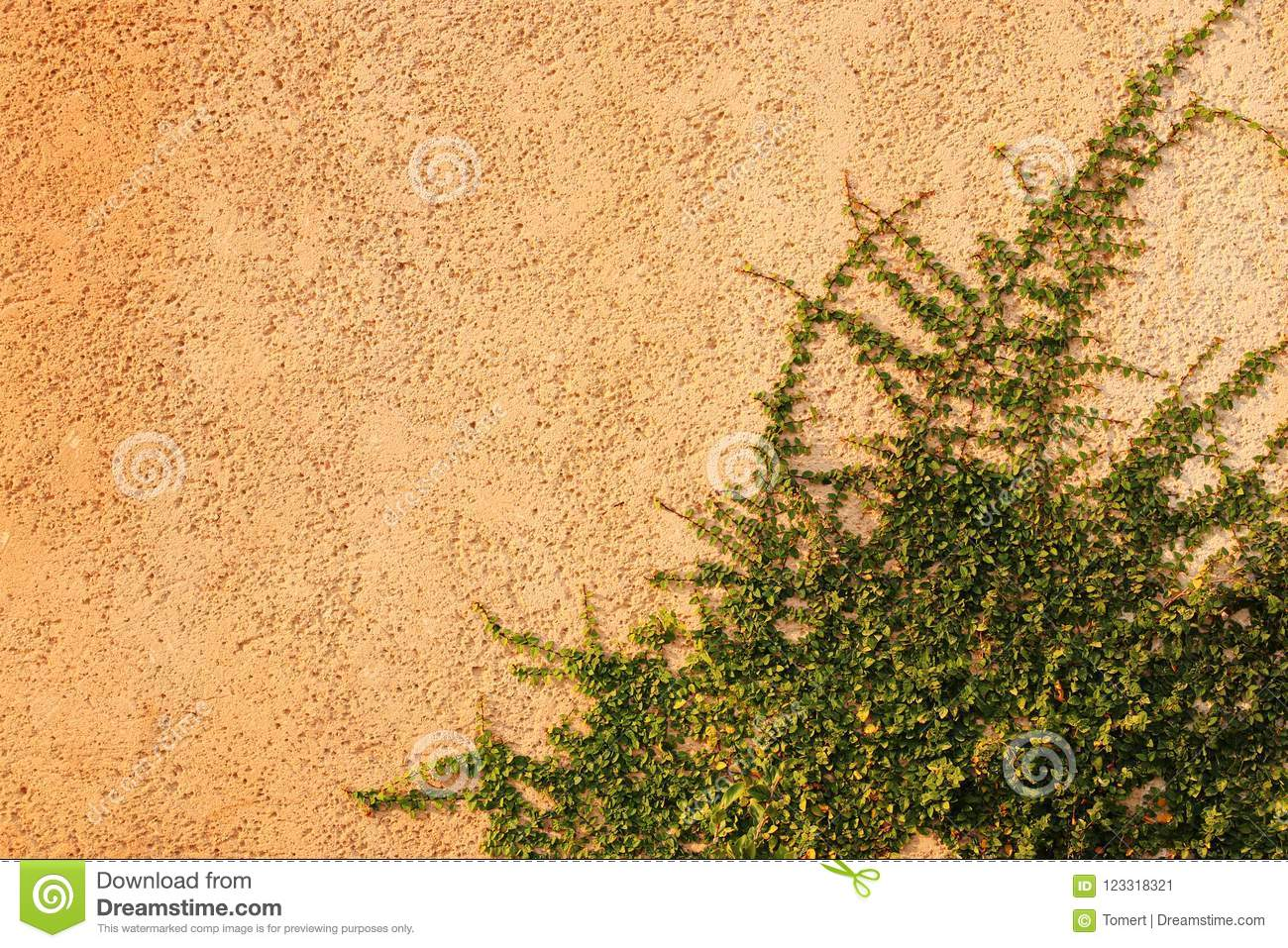 Green Creeper Plant On Textured Wall. Stock Image - Image of growth ...