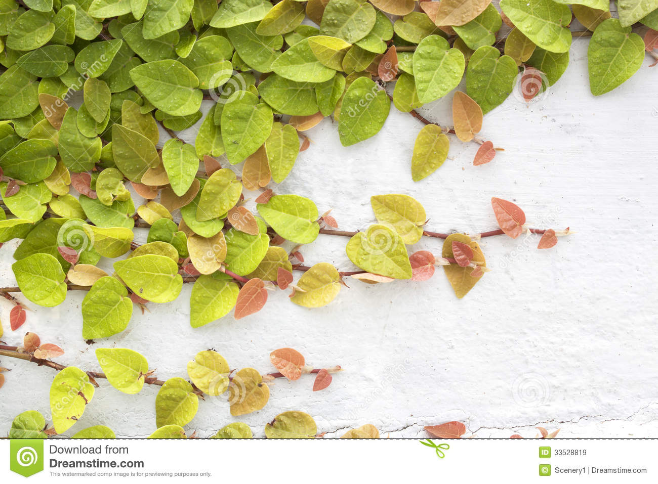 Green creeper stock image. Image of fence, leaf, home - 33528819