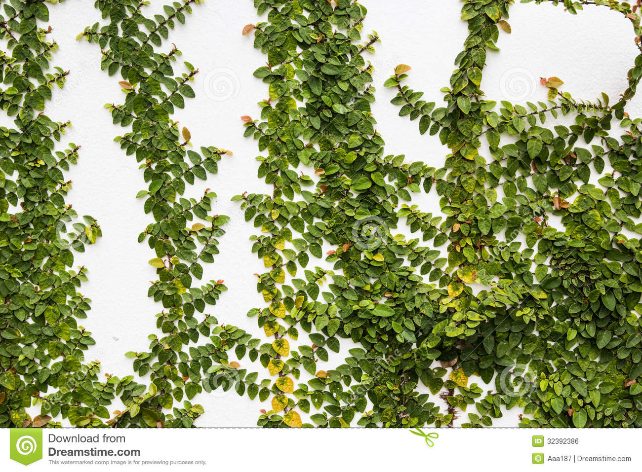 Creeper Plant On Wall Royalty Free Stock Image Image